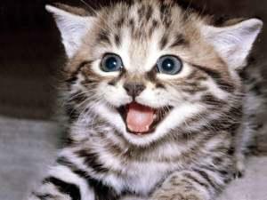happy-kitten-kittens-5890512-1600-1200