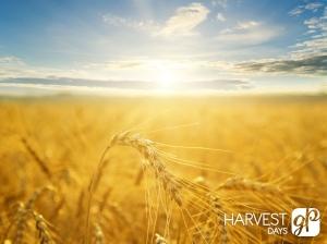 harvest-blank